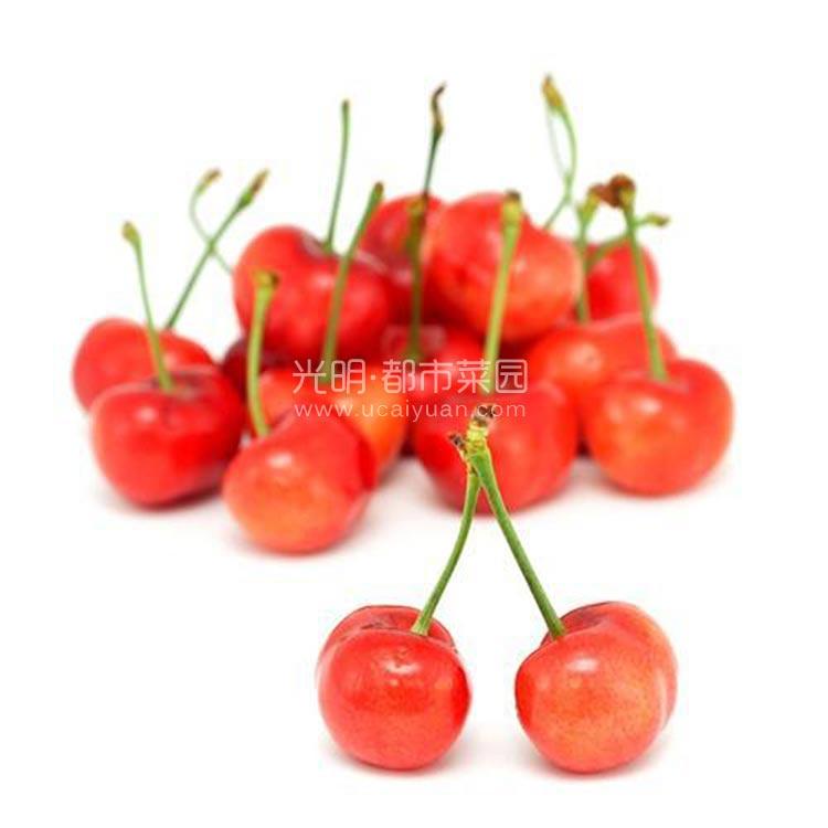 山东特级樱桃 500g