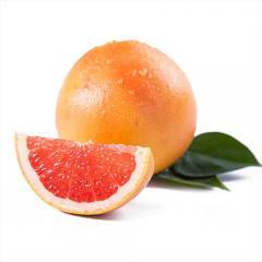 以色列葡萄柚4个约250g/个